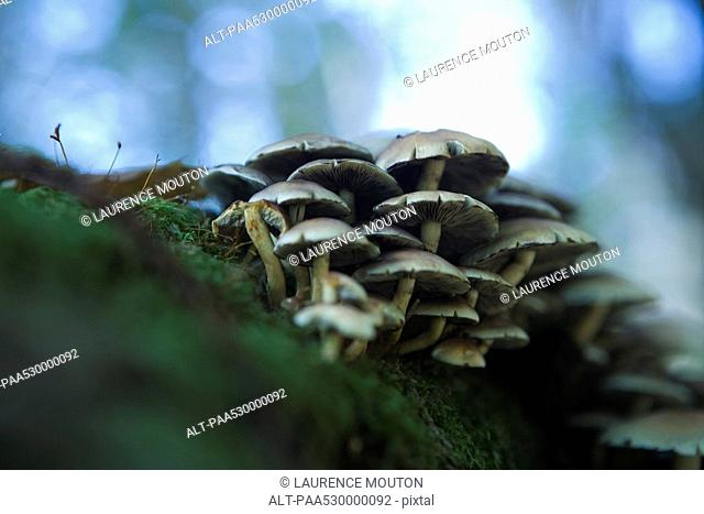 Mushrooms on the ground, low angle view