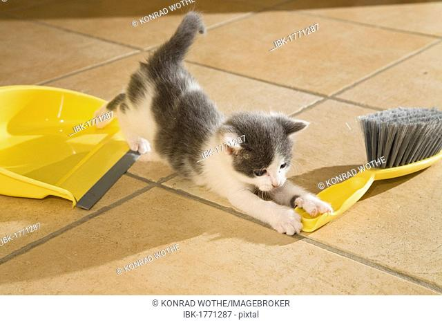 Kitten playing with dustpan and broom