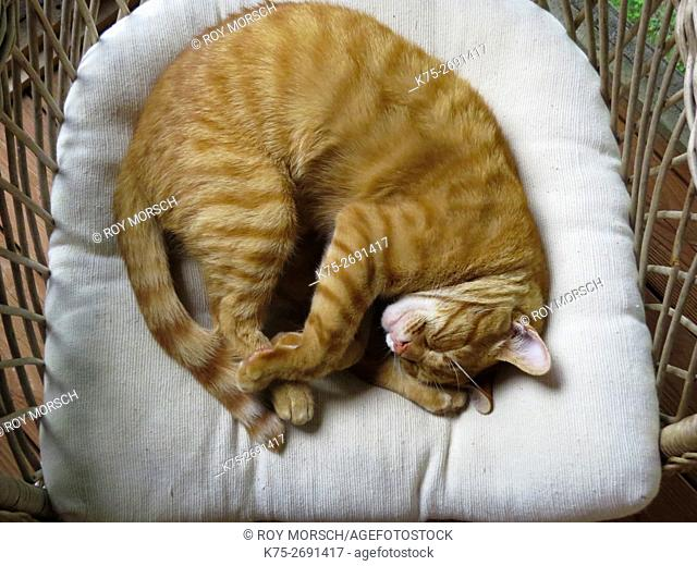 Cat napping in chair
