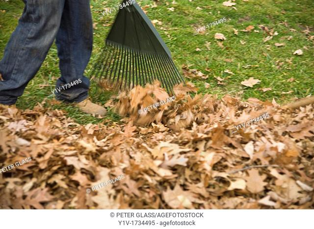 Close-up of a man raking leaves