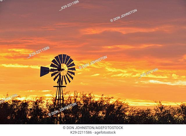 Water pumping windmill at dawn on Campos Viejos Ranch, Rio Grande City, Texas, USA