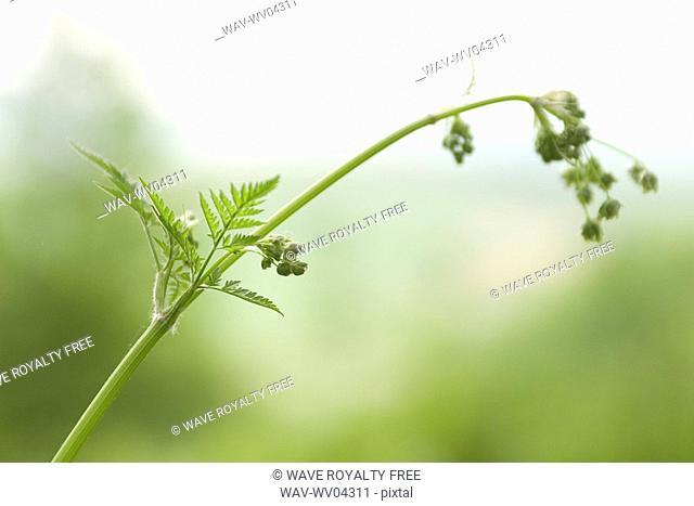Plant, Poland