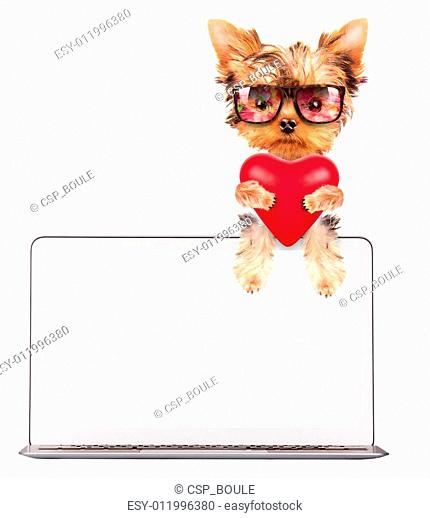 dog holding heart with computer