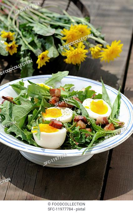 Spring salad with egg, dandelions and diced bacon