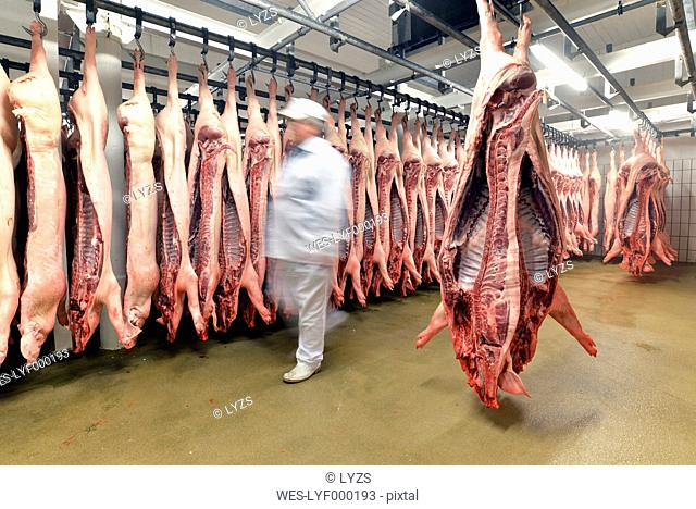 Sides of pork in cold store of a slaughterhouse