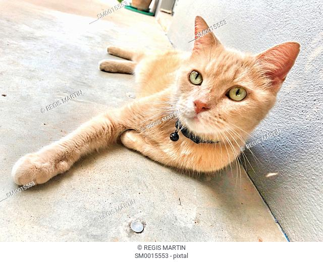 Domestic cat resting on a concrete floor