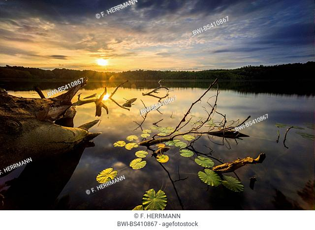dead trunks in a lake , Germany, Brandenburg, Stechlin, Neuglobsow