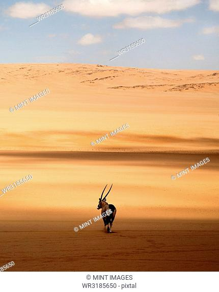Rear view of oryx standing in the African desert