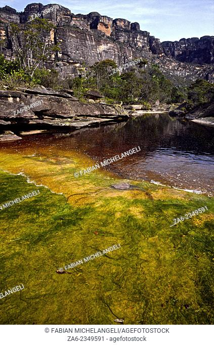 Tea-colored stream and green algae covered rock on the Auyantepuy summit. Canaima National Park, Bolivar State. Venezuela