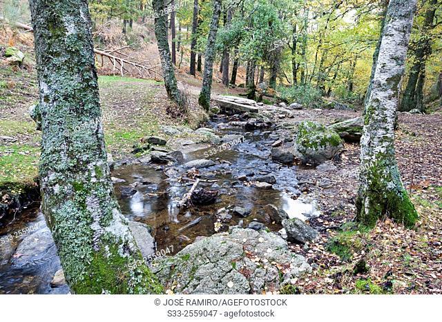 Bridge in the Sestil streaml in the Canencia Birch. Sierra de la Morcuera. Madrid. Spain. Europe