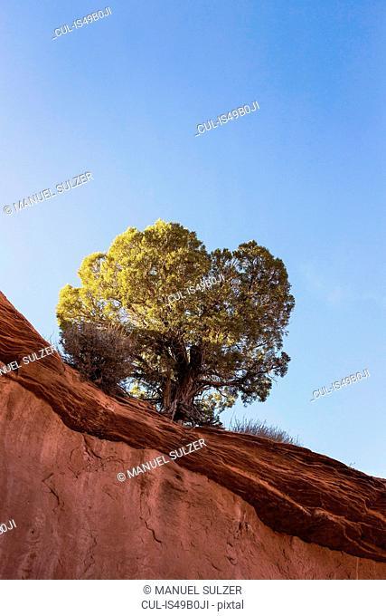 Rock formation with single tree, Escalante, Utah, USA