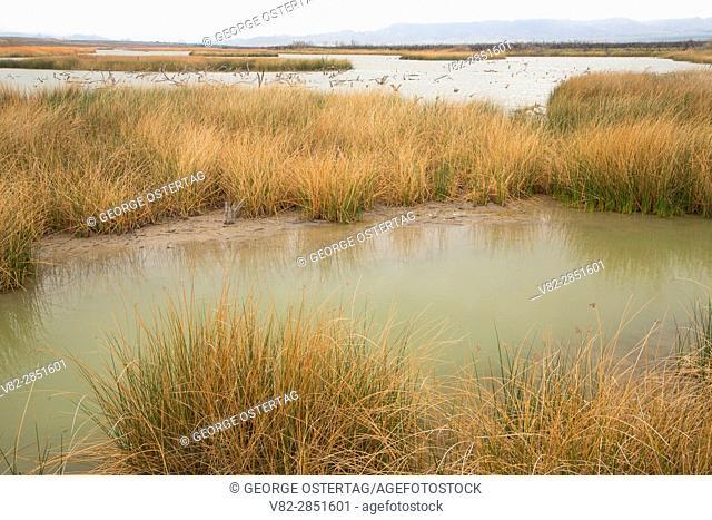 Toprock Marsh, Havasu National Wildlife Refuge, Arizona