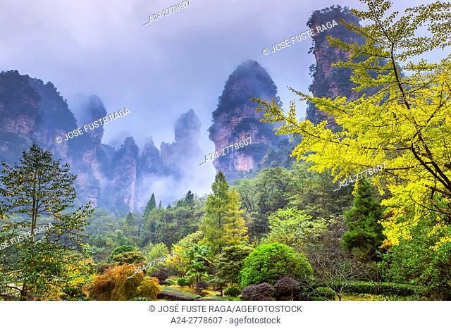 China, Hunan Province, Zhangjiajie City, Zhangjiajie Scenic Park, Wulingyuan