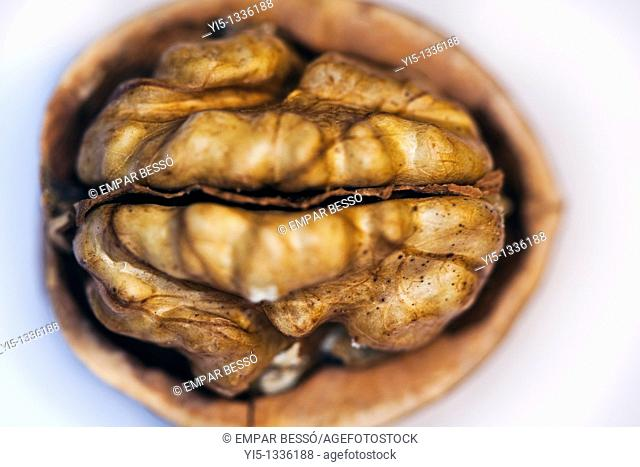Walnut close-up