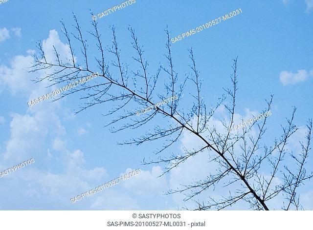 Low angle view of twig on a tree, Jim Corbett National Park, Nainital, Uttarakhand, India