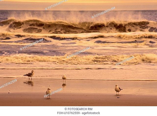 ov34, surf, ny, beach, long, seagulls