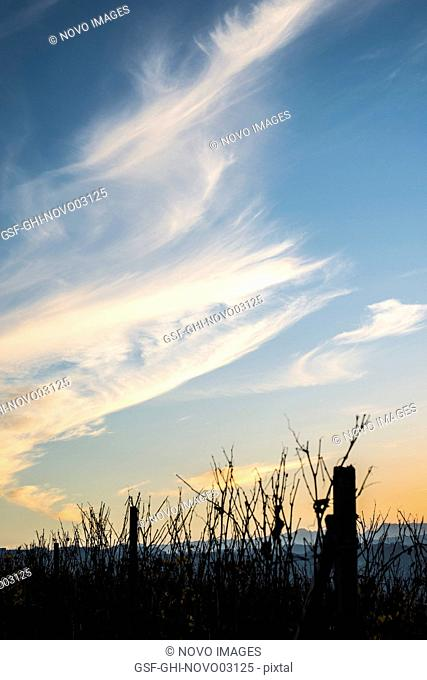 Sunset over Winter Vineyard