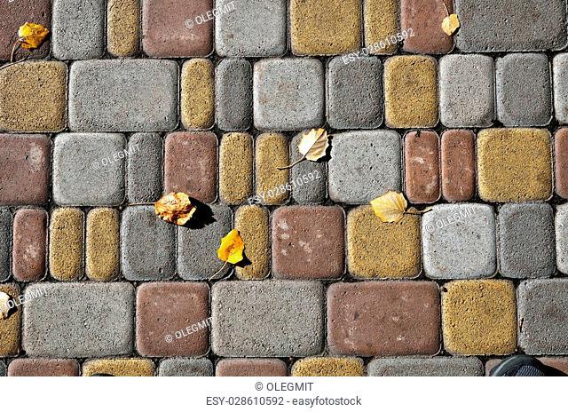 Several fallen leaves on the modern tiled sidewalk