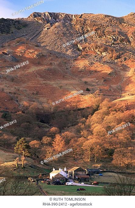 Farm and Lingmoor Fell at sunrise, Great Langdale, Lake District National Park, Cumbria, England, United Kingdom U.K., Europe