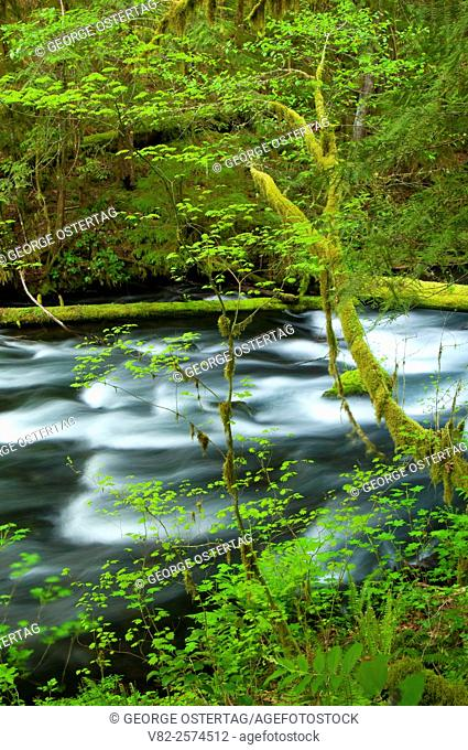 Lost Creek along McKenzie River National Recreation Trail, McKenzie Wild and Scenic River, McKenzie Pass-Santiam Pass National Scenic Byway