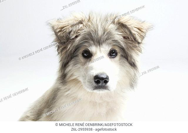 Rescue puppy dog mutt mixed- breed