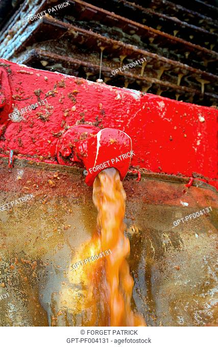 APPLE JUICE COMING OUT OF THE HYDRAULIC PRESS, THE MAKING OF FARM CIDER, CLAUDE COURBE'S FARM, RUGLES (27), FRANCE