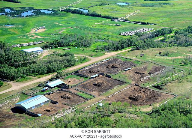 aerial, farm, feedlot, Duck Lake, Saskatchewan