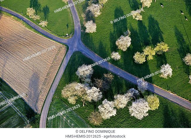 France, Doubs, Vandoncourt, cherry blossoms at the intersection of two county roads in the countryside (aerial view)