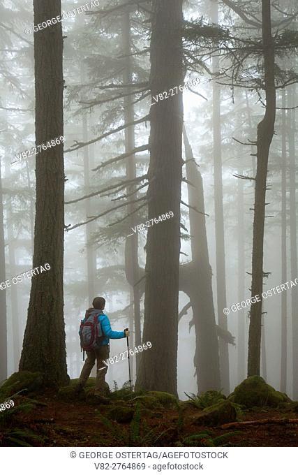 Forest in fog on Spencer Butte Summit Main Trail, Spencer Butte Park, Eugene, Oregon