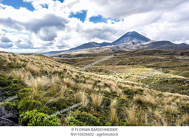 Mount Tongariro with grassland, Lord of the Rings Location, Mordor, Tongariro National Park, New Zealand