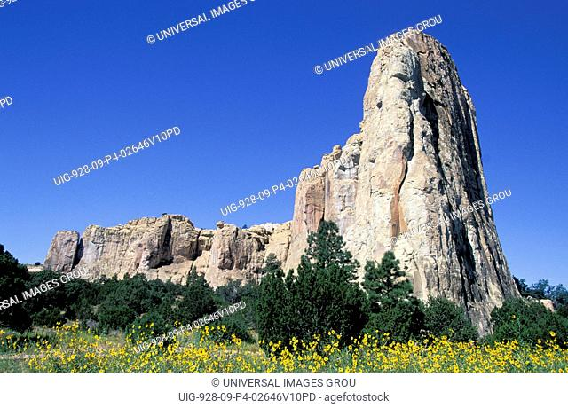 New Mexico, El Morro National Monument, Rock, Flowers