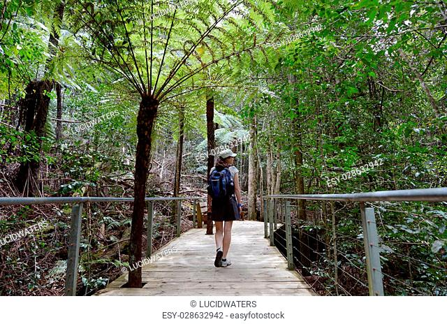 Woman walks on a path in the rainforest