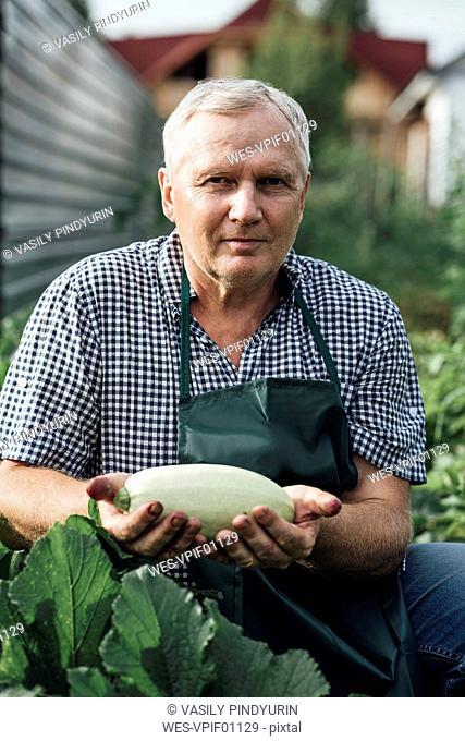 Gardener holding zucchini