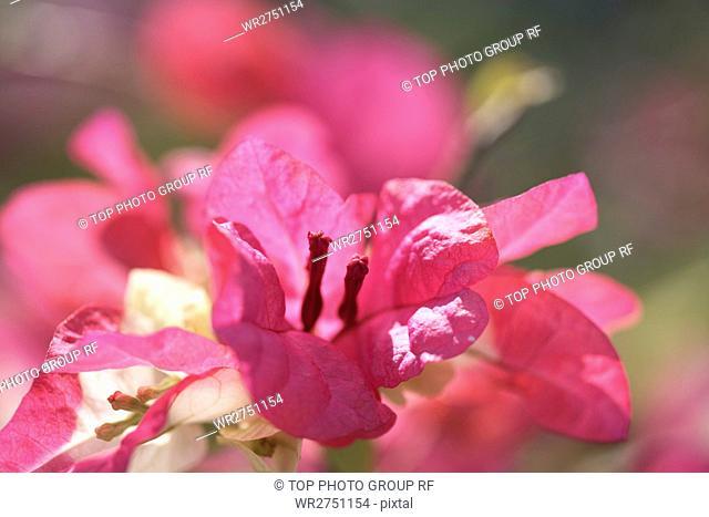 Flower & Herb