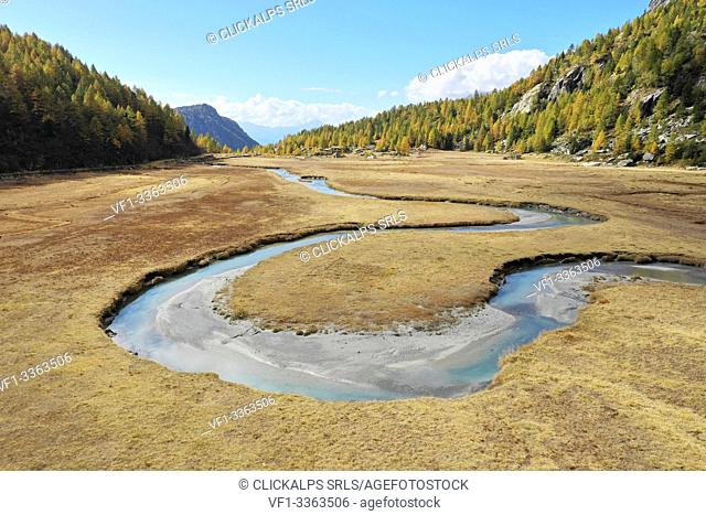 Aerial view of the winding Duino river and the larches in autumn in Preda Rossa valley. Val Masino, Sondrio province, Lombardy, Italy