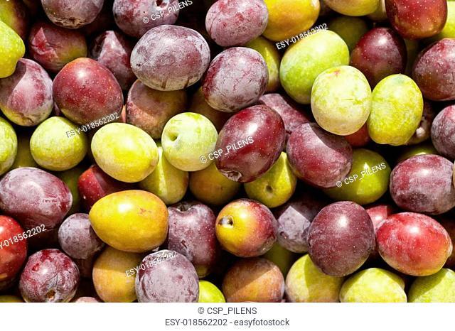 Freshly Harvested Olives Background