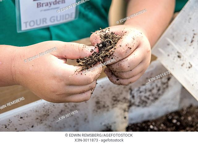 Child hands working soul in between fingers while gardening, Crellin, Maryland. USA
