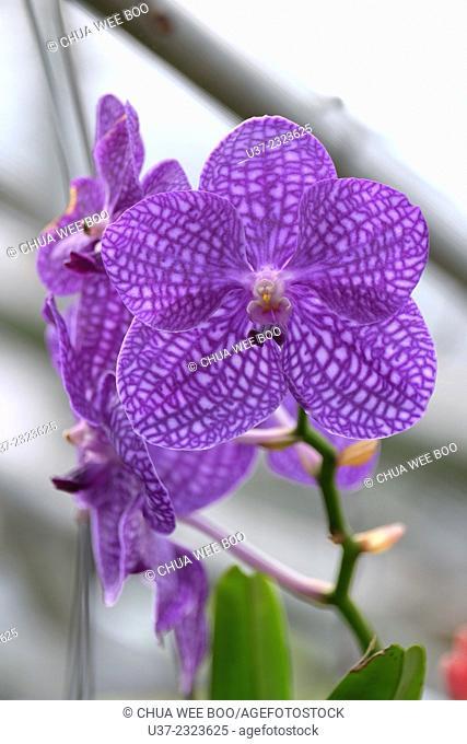 Bai Butterfly & Orchid Garden, Chiangmai, Thailand