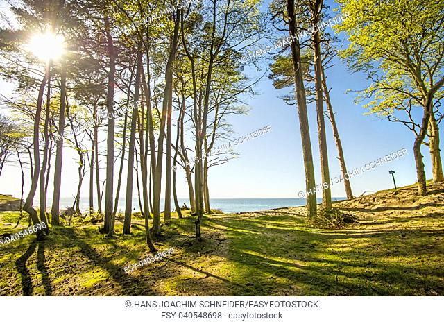 beach of the Baltic Sea in Orzechowo, Poland