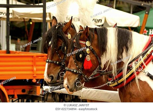 Krakow, Poland, Horse drawn carriages with guides in front of the St. Mary's Basilica