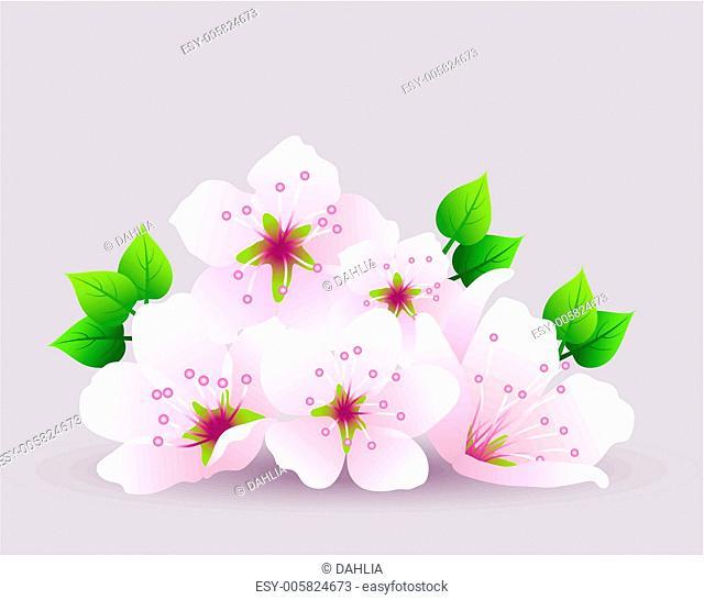 vector cherry flowers