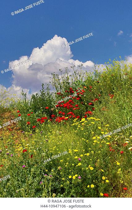 Spain, Europe, Andalucia, Region, Malaga, Province, landscape, amapolas, poppies, cloud, colour, colourful, flowers, green, skyline, spring