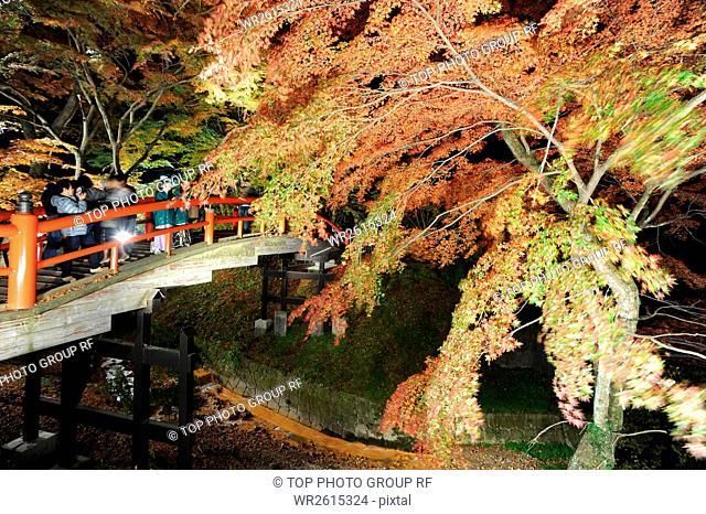 red leaves and displayed lanterns,Singing frog Bridge,Ikaho,Gunma,Japan