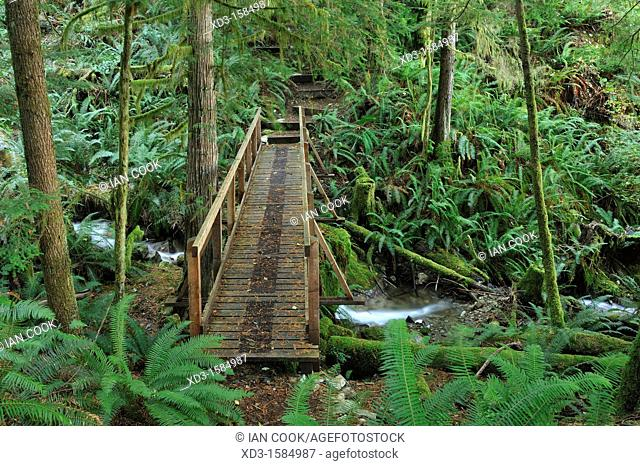 footbridge on Surge Narrows Trail, Quadra Island, British Columbia, Canada