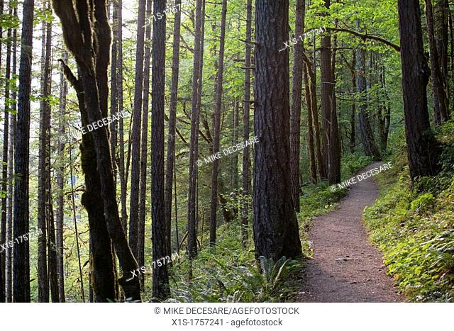 A narrow hiking trail in a dense forest with tall trees