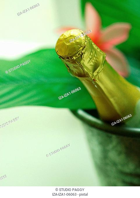 Close-up of a champagne bottle in an ice bucket