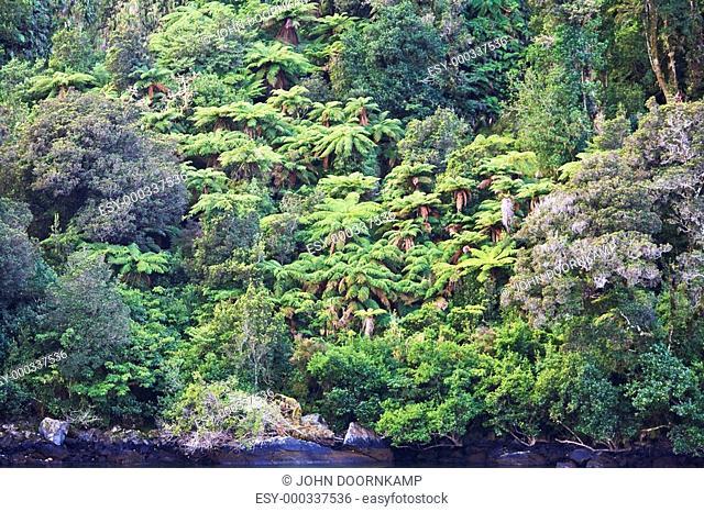 Fiordland National Park, Milford Sound, South Island, New Zealand