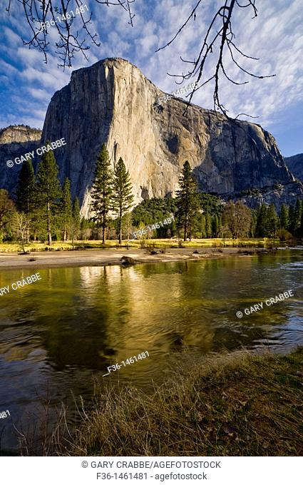 El Capitan on a Spring morning above the Merced River, Yosemite Valley, Yosemite National Park, California