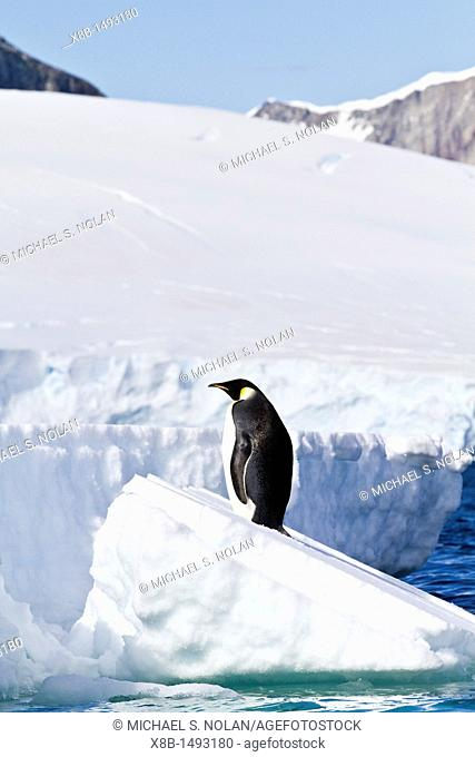 A lone adult emperor penguin Aptenodytes forsteri on sea ice in the Gullet between Adelaide Island and the Antarctic Peninsula