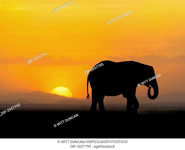Elephant walks beneath a setting sun